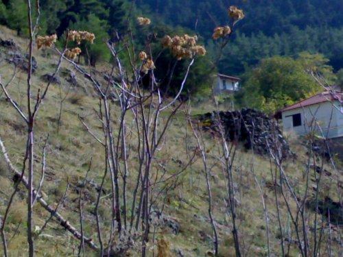 για την διατήρηση των αλωνιών στην Βλαχ�ρνα γίνεται ιδιαίτερη μνεία στην απόφαση χαρακτηρισμού του χωριού ως παραδοσιακού οικισμού